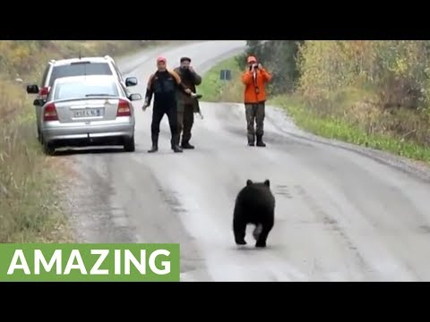 """Friendly dog decides to play """"tag"""" with a wild bear"""