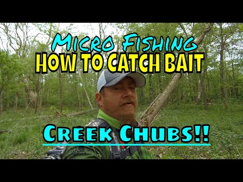 Micro Fishing! How To Find And Catch Creek Chubs For Bait!