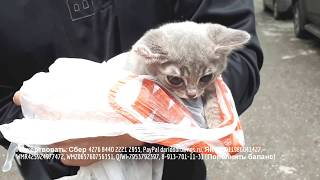 Мужчина инвалид не смог пройти мимо искалеченного котенка | Beaten kitten is waiting for help