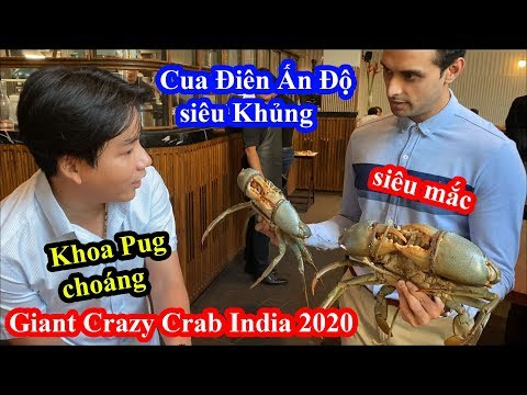 Cua Ấn Độ Siêu Khổng Lồ Siêu Mắc - Khoa Pug Choáng Váng - Giant Crazy Crab - Food Tour India 2020