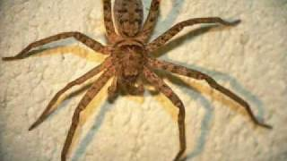 Incy Wincy Spider INDIAN REMIX