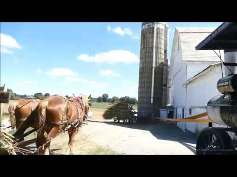 Silo Filling with Draft Horses & Steam - Part 1 of 2