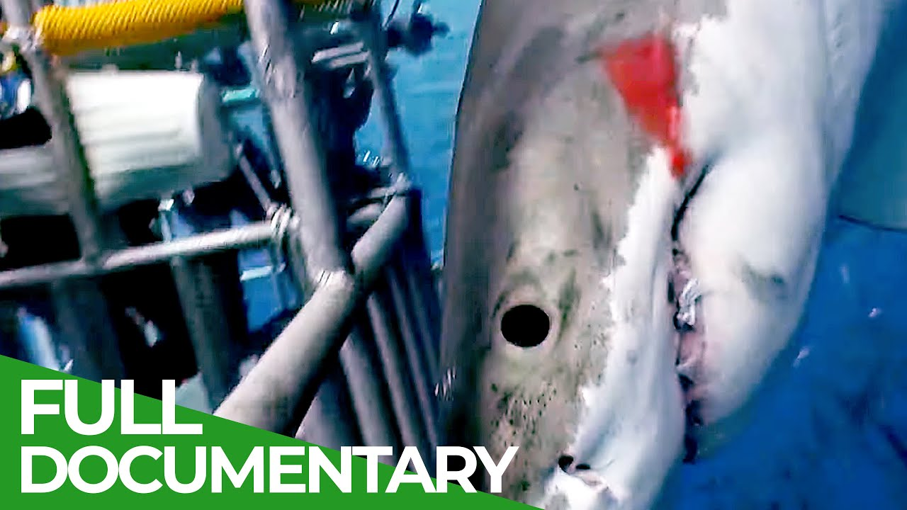 Shark Divers | Blue Realm | Free Documentary Nature