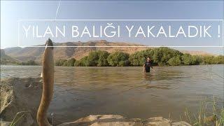 Gambar cover Yılan balığı yakaladık !  (VideoGünlük #4)