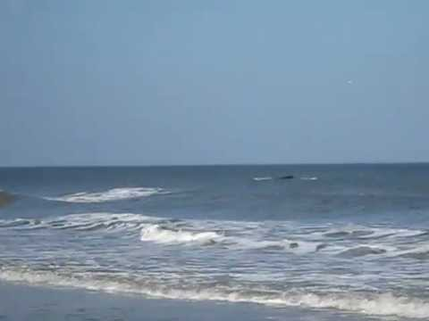 Right Whale off Amelia Island