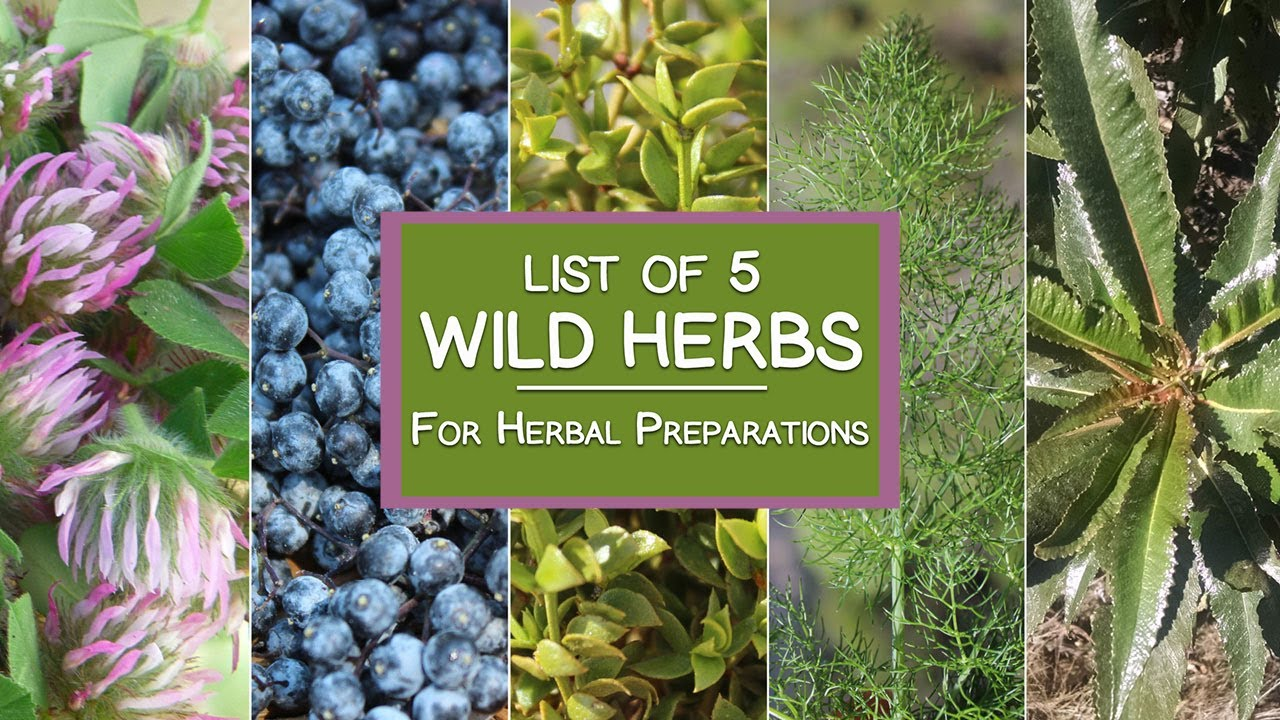 the wild wisdom of weeds 13 essential plants for human survival