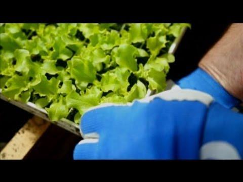Как использовать минеральные удобрения в теплице - Дача