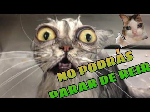 Animales Chistosos para Rer sin Parar  Mejores Videos de Animales Graciosos de la Semana