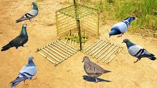 Primitive Technology: Simple DIY Bird Trap Make from Bamboo That Work 100% By Smart Boy