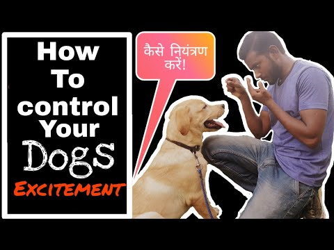 How to control puppy excitement |labrador training in hindi | Control excessive jumping and biting
