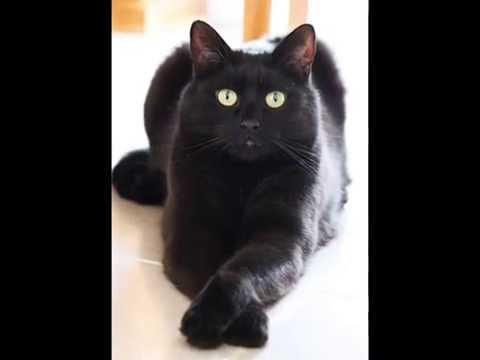Top 10 Most Friendly Cat Breeds