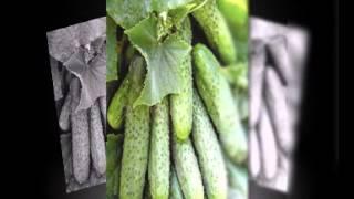 семена овощей купить в украине(, 2015-02-04T22:59:28.000Z)