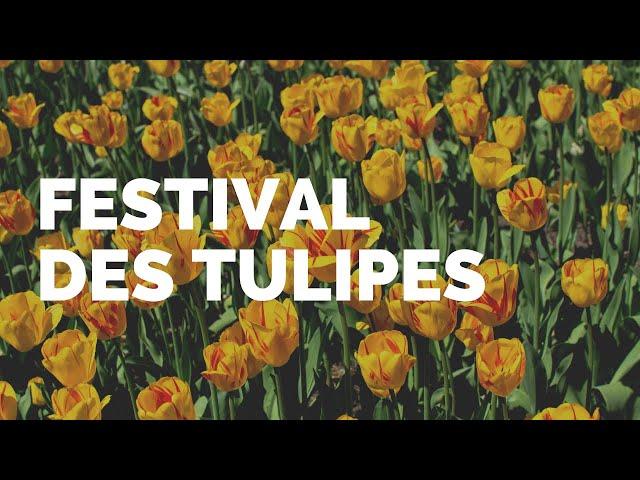 FESTIVAL DES TULIPES | OTTAWA | #ONTARIO | 🎥 GOPRO 6 KARMA GRIP