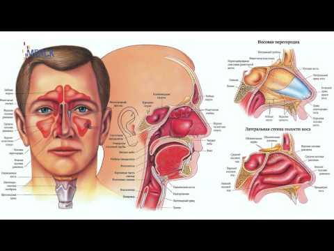 Воспаление слюнных желез: причины, симптомы, лечение в