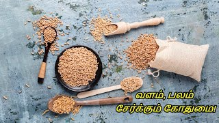Benefits of Eating Wheat in Tamil | Whole Grains - Gothumai Payangal | Healthy Life - Tamil.