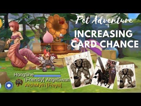 Ragnarok Mobile : PET ADVENTURE Increasing Card Chance