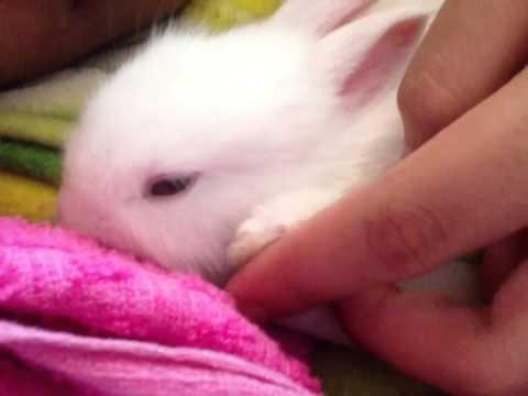กระต่ายแคระ...น้ำเพชรหลับแล้ว