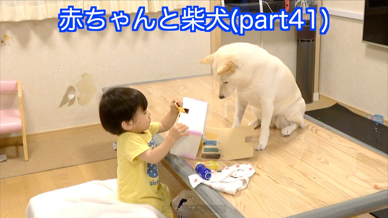 赤ちゃんと柴犬(part41)