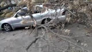 Ураган в Бердске