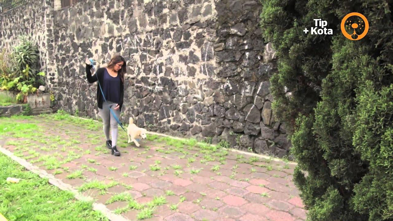 Cuidados de las mascotas: Tip +KOTA para cuando sacas a pasear a tu perro.