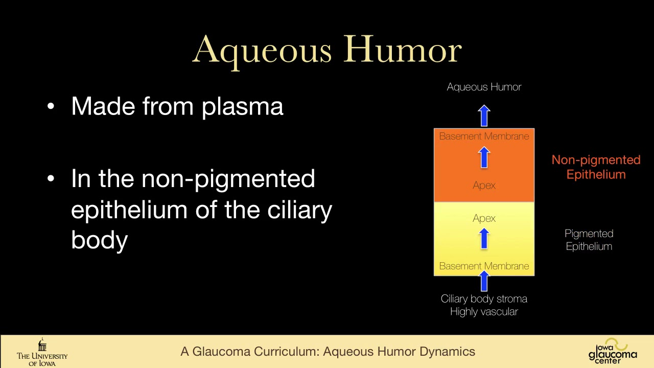 Aqueous humor dynamics, anterior chamber anatomy and ciliary body ...