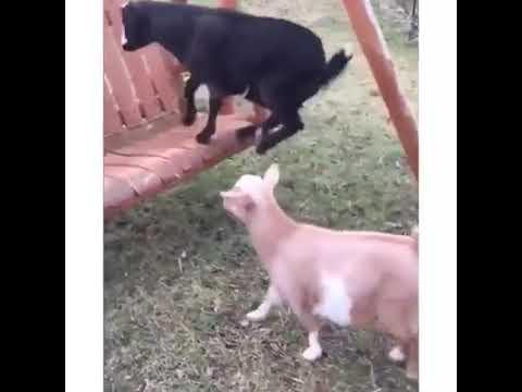 Animales estupidos