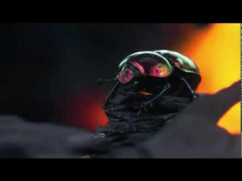 UNUSUAL WORLD. PRODIGIOUS DESIGNS, INFINITE COLOURS Trailer