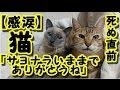 【感動 泣ける話】猫が死ぬ直前に心を許した人にだけ見せる行動が衝撃 / 猫「サヨナ…