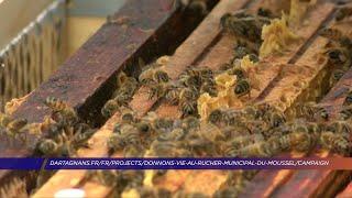 Yvelines | À Andrésy, un rucher municipal et pédagogique à proximité de la mairie