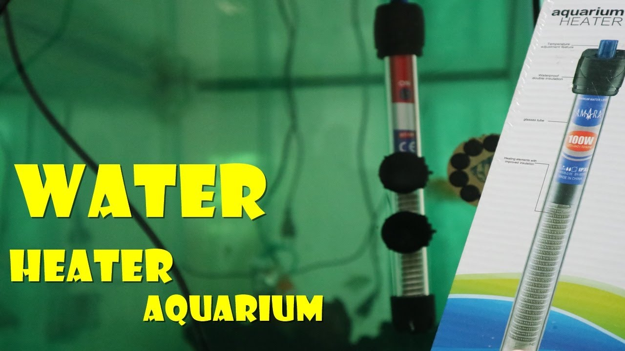 Cara Pasang Water Heater Penghangat Air Aquarium Supaya Ikan Sehat Atasi Jamur Youtube