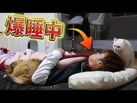猫は飼主が寝てるあいだ何をしているのか?