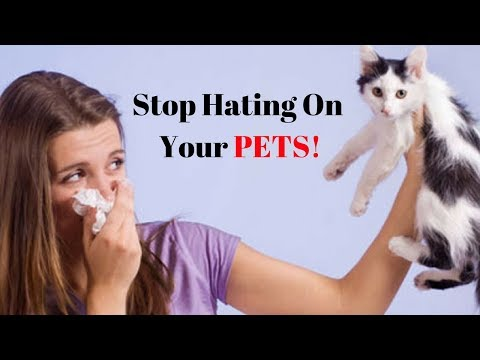 Best Air Purifier For Pet Allergies And Asthma