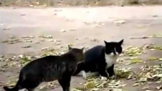 Policia Separa Briga de Gatos