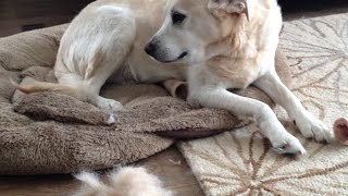 How To Groom Your Dog Using a Deshedding Tool video by GranPaws