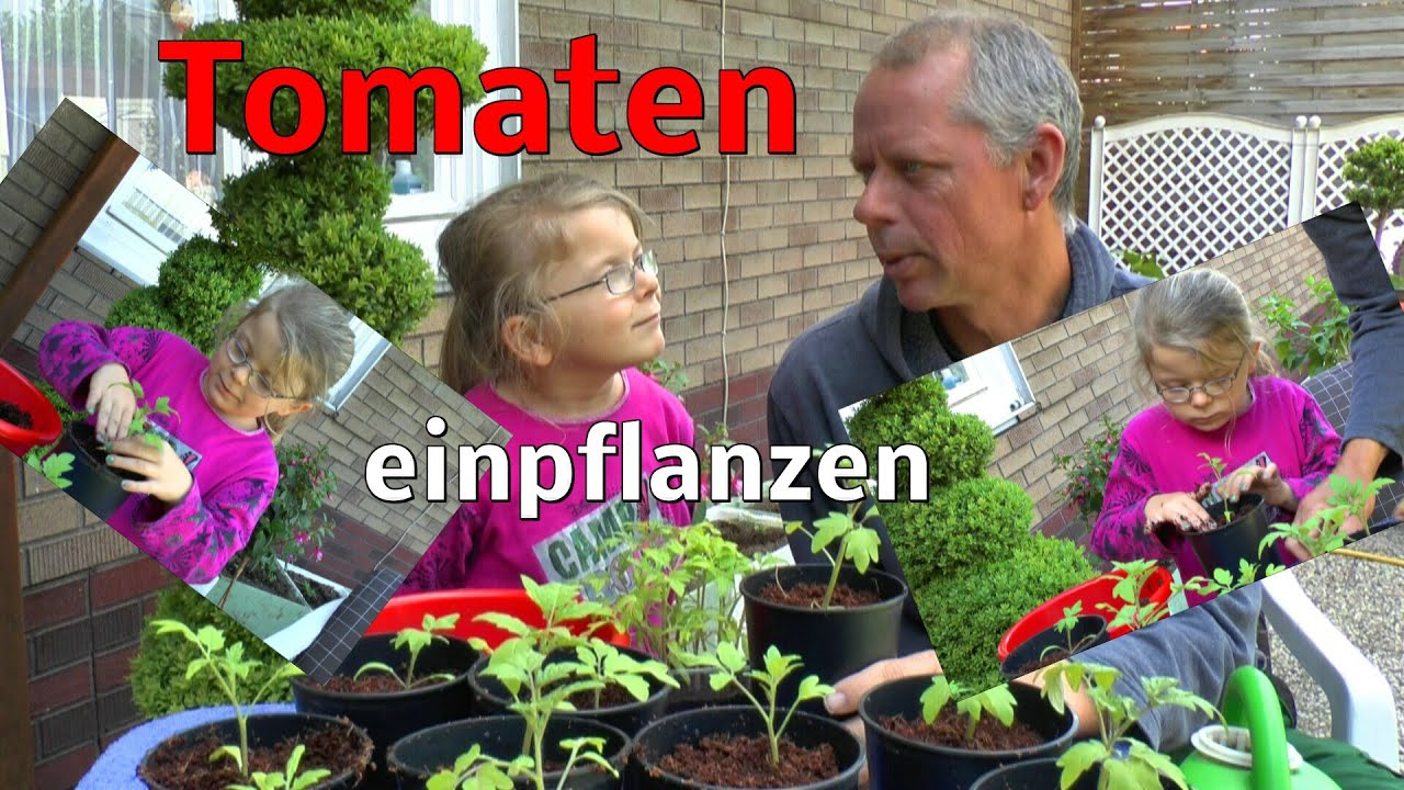 tomaten einpflanzen pikieren youtube. Black Bedroom Furniture Sets. Home Design Ideas