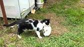 4ed093b5a1b1 γατάκια τρώνε το νεκρό αδελφάκι τους!!! - YouTube