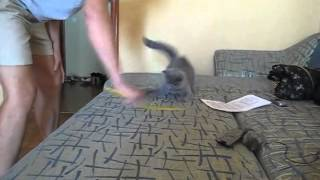 Самый быстрый кот в мире!