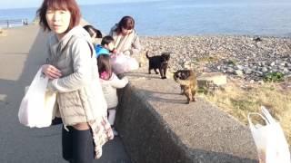 猫島で猫が目の前でオシッコをしたあとケンカを始めます.