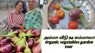 அம்மாவுடன் ஒரு நாள்    அப்பாவின் Organic காய்கறி தோட்டம்    Garden Tour in Tamil