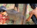 Top 10 AMAZING Net Fishing - Net Fishing at Siem Reap Province  - Cambodia Traditional Fishing