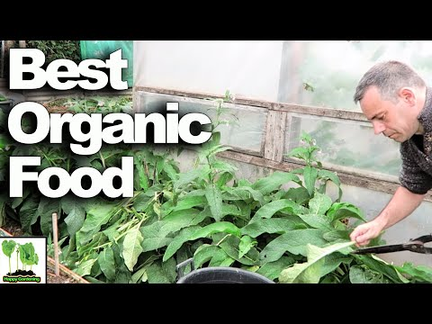 HOW to make FREE organic fertilizer - The Very BEST Way!