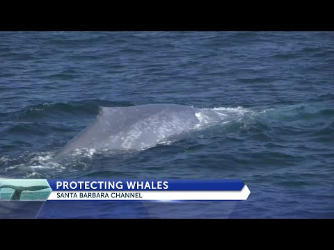 UCSB creating technology to make ocean safer for whales, cargo ships