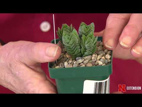 Go Gardening Succulents