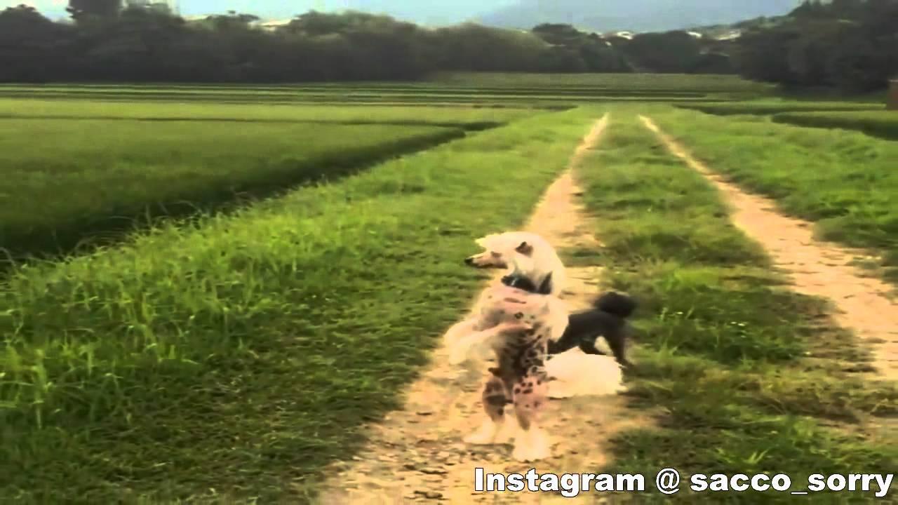 Dog Walks On Hind Legs Channel