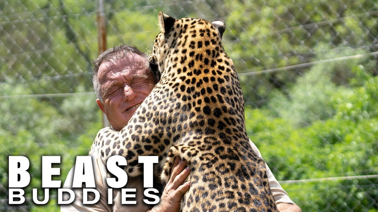 Download The Man Who Lives With Leopards | BEAST BUDDIES