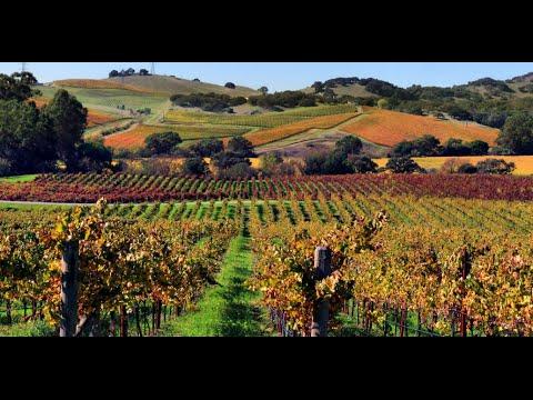 Does Organic Wine Taste Better?