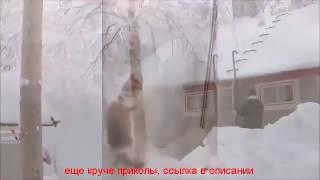 видео приколы про животных бесплатно 2016