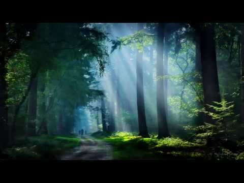 Nightingale's Song In The Forest In the Morning August 2017-1hr beautiful relaxing birdsong