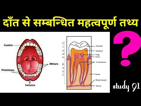 Teeth दांत से सम्बन्धित महत्वपूर्ण तथ्य science biology science video class  Study 91 #Nitin