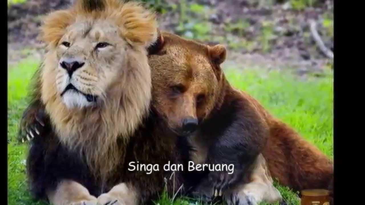 Nama Binatang Ragam Fauna  Aneka Hewan  YouTube